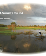 Birds of Australia's Top End 2020 calendar raises money to fight gamba grass fuelled bushfires